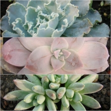 2Succulent Mohave Ast 18 - bottom
