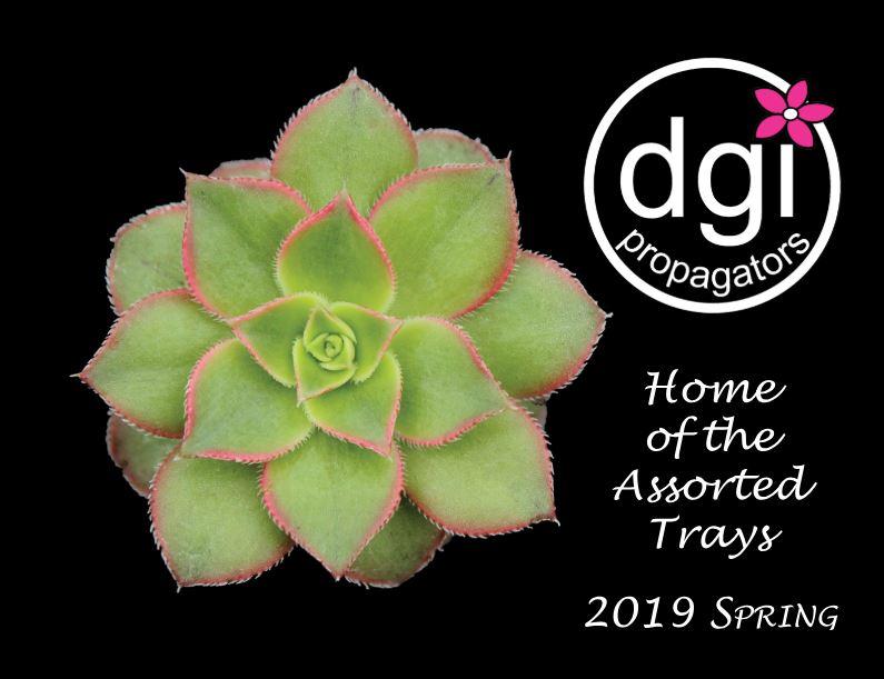 2019 DGI Catalog